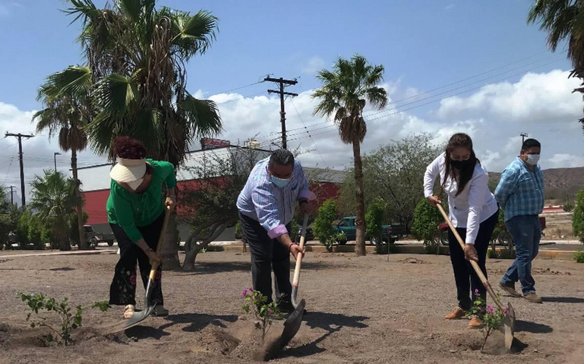 Siembran 4,500 árboles a lo largo de Loreto - El Sudcaliforniano