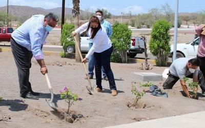 Reforestan espacios públicos de Loreto y Mulegé - El Sudcaliforniano