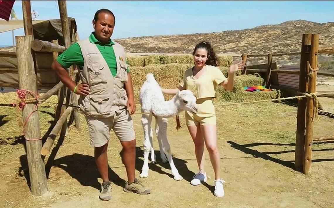 Nace primer camello en Los Cabos - Noticias Locales, Policiacas, sobre  México y el Mundo | El Sudcaliforniano | Baja California Sur